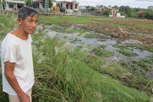 Sản xuất nông nghiệp Quảng Bình lo không có lụt