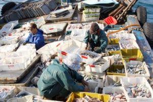 Sẽ có hạn ngạch giấy phép khai thác thủy sản