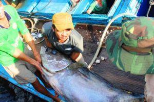 Triển khai Luật Thủy sản: Ngư dân Bình Định quyết gỡ 'thẻ vàng' IUU