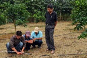 'Dẫn tận nơi, chỉ tại chỗ' làm nông nghiệp công nghệ cao