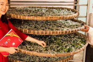 Bình Định: Nông nghiệp, nông thôn chiếm 88% tổng dư nợ