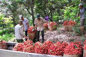 Nghị quyết Trung ương 7, khóa X đã giúp nông dân cải thiện được đời sống