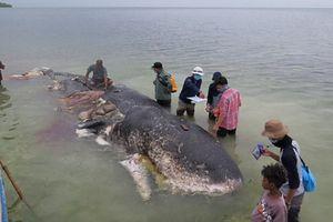 Tìm thấy 6kg nhựa trong bụng cá nhà táng