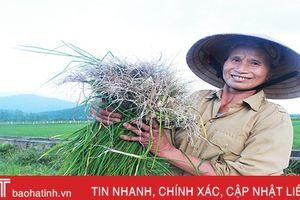 Gần 300 triệu đồng/ha hành tăm, dân Thiên Lộc thi nhau mở rộng diện tích