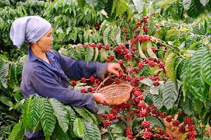 BẢN TIN TÀI CHÍNH-KINH DOANH: Tăng tiền phạt cho hành vi bán hàng đa cấp bất chính, nông sản 'sụt giá' nghiêm trọng