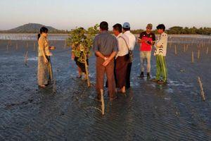 Myanmar nỗ lực khôi phục khu vực rừng ngập mặn suy thoái