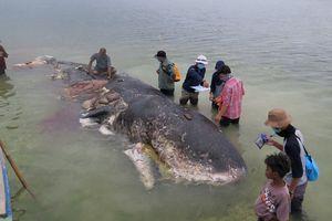 Cá nhà táng chết dạt vào bờ với hơn 1.000 mảnh nhựa, gần 6kg rác được tìm thấy trong bụng