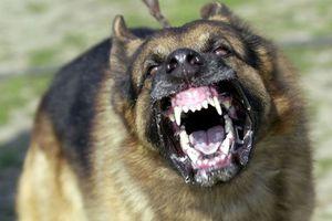 Hàng loạt vụ chó nhà tấn công và cắn chết người đầy thương tâm