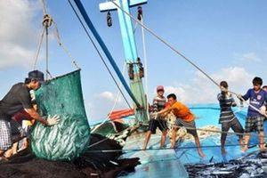 Thi hành Luật Thủy sản: 'Bước ngoặt' mới cho hệ thống kiểm ngư