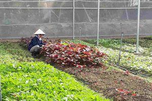 Hà Nội: Sử dụng thuốc BVTV bằng 20% trung bình cả nước