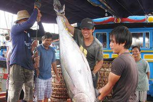 Sau bài báo Lao Động, Bộ NNPTNT gửi công văn hỏa tốc giải cứu doanh nghiệp thủy sản