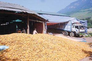 Doanh nghiệp đầu tư vào nông nghiệp: Vẫn còn điểm nghẽn!
