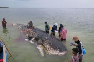 Xác cá nhà táng với hàng nghìn mảnh nhựa trong dạ dày