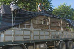 Bắt 2 xe tải gắn biển số giả vận chuyển hơn 60m3 gỗ lậu