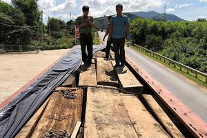 Đắk Lắk: Phát hiện hàng trăm lóng gỗ lậu trên xe tải gắn biển số giả