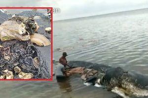 Dép tông, vỏ chai, cốc nhựa, túi nilon được tìm thấy trong xác cá nhà táng