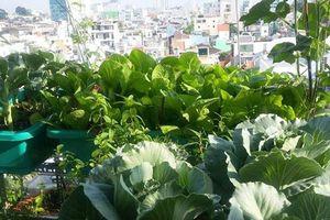 Sân thượng 'nhỏ mà có võ' xanh mướt mát rau sạch của mẹ đảm Sài Gòn