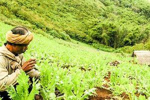 Thảm họa ma túy đá - Kỳ 1: Tràn lan khắp châu Á