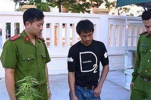 Thanh Hóa: Thanh niên nghiện ma túy trồng cần sa ngay tại nhà mình