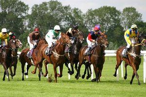 Hà Nội xây trường đua ngựa: Quản lý chặt việc kinh doanh cá cược