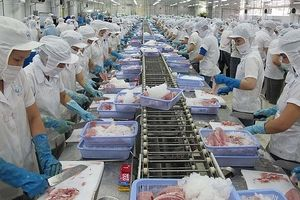 Đã có phương án giải quyết hải sản nhập khẩu 'ách' tại cảng