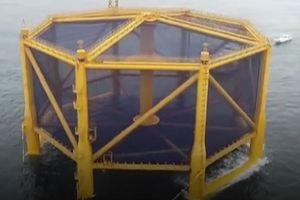 Lồng nuôi cá hồi dưới biển sâu lớn nhất thế giới của Trung Quốc