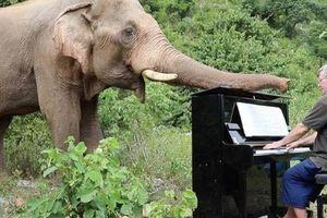 Chơi đàn cho voi