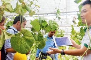 Startup trẻ khởi nghiệp trong nông nghiệp phải chọn bản sắc vùng miền và tính toán thông minh