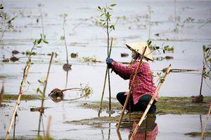 Phát huy vai trò của phụ nữ trong việc bảo vệ nguồn nước, hệ sinh thái ven biển