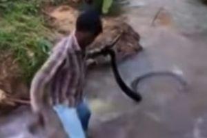 'Thầy rắn' Ấn Độ tay không giải cứu hổ mang chúa khổng lồ