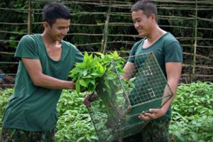 Kiên Giang: Những 'nhà nông' giỏi trồng rau trên quần đảo Hải Tặc