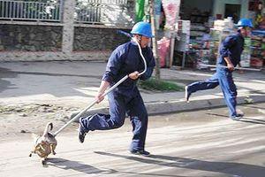 Quận Thanh Xuân lập tổ phản ứng nhanh bắt chó thả rông