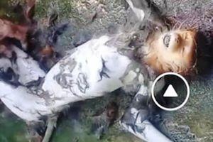 Truy tìm kẻ giết khỉ dã man, đưa lên facebook
