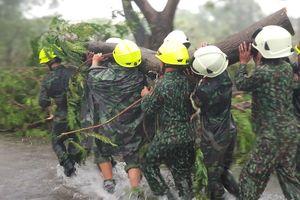 Cây đổ la liệt trong bão số 9 ở Sài Gòn, Vũng Tàu
