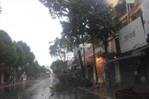 Video bão số 9 đổ bộ vào Vũng Tàu, gây mưa to, gió giật mạnh, cây cối ngã đổ