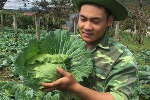 Trai 18 tuổi, trồng 6.000m2 rau cải bắp, kiếm 100 triệu đồng/năm