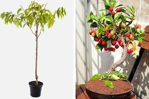 Cách trồng 8 loại cây ăn quả bằng hạt cho vườn nhà phố