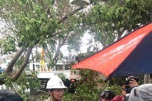 Bão số 9 gây thiệt hại cho TP HCM và các tỉnh ven biển Tây Nam bộ