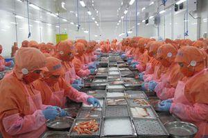 Làm sao để tôm Việt xuất khẩu tốt hơn sang EU, Hoa Kỳ?
