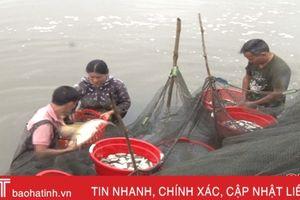 'Đánh thức' 565 ha ao hồ nước ngọt, nông dân Can Lộc thu 30 tỷ đồng/năm