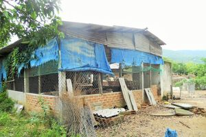Phù Cát (Bình Định): Dân 'kêu trời' vì trại nuôi heo gây ô nhiễm