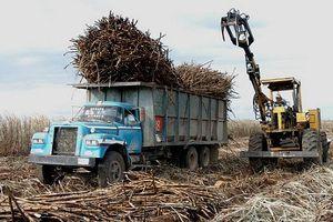 8 quốc gia sản xuất đường nhiều nhất thế giới