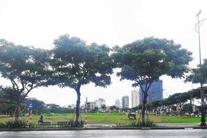 Đà Nẵng xem xét, đấu giá lại các lô đất vừa hủy kết quả