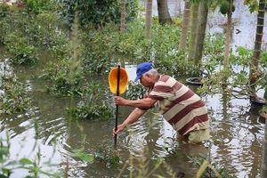 Vườn mai Thủ Đức ngập nặng sau bão số 9