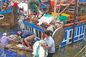 Quảng Nam: Hai tàu cá bị đánh chìm khi đang neo đậu tránh bão