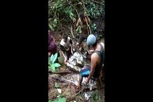 Toát mồ hôi xem cảnh bắt trăn khổng lồ ở Indonesia