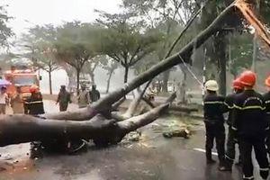 TP.HCM mưa kéo dài, ngập sâu, cây ngã đè chết người