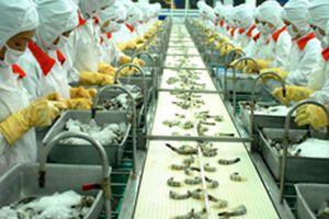Thị trường xuất khẩu tôm tiếp tục chững lại