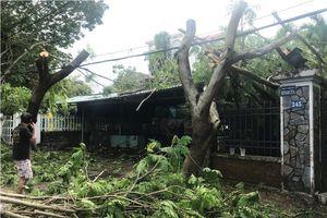 Cần Giờ ngổn ngang trụ điện, cây đổ sau bão số 9
