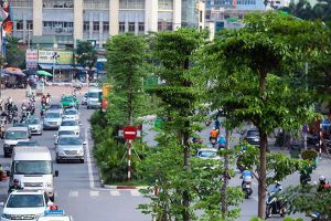 Hà Nội trồng mới thêm hơn 620.000 cây xanh